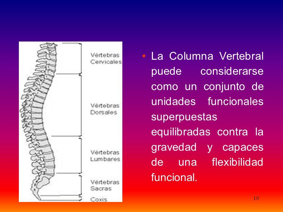 10 La Columna Vertebral puede considerarse como un conjunto de unidades funcionales superpuestas equilibradas contra la gravedad y capaces de una flexibilidad funcional.