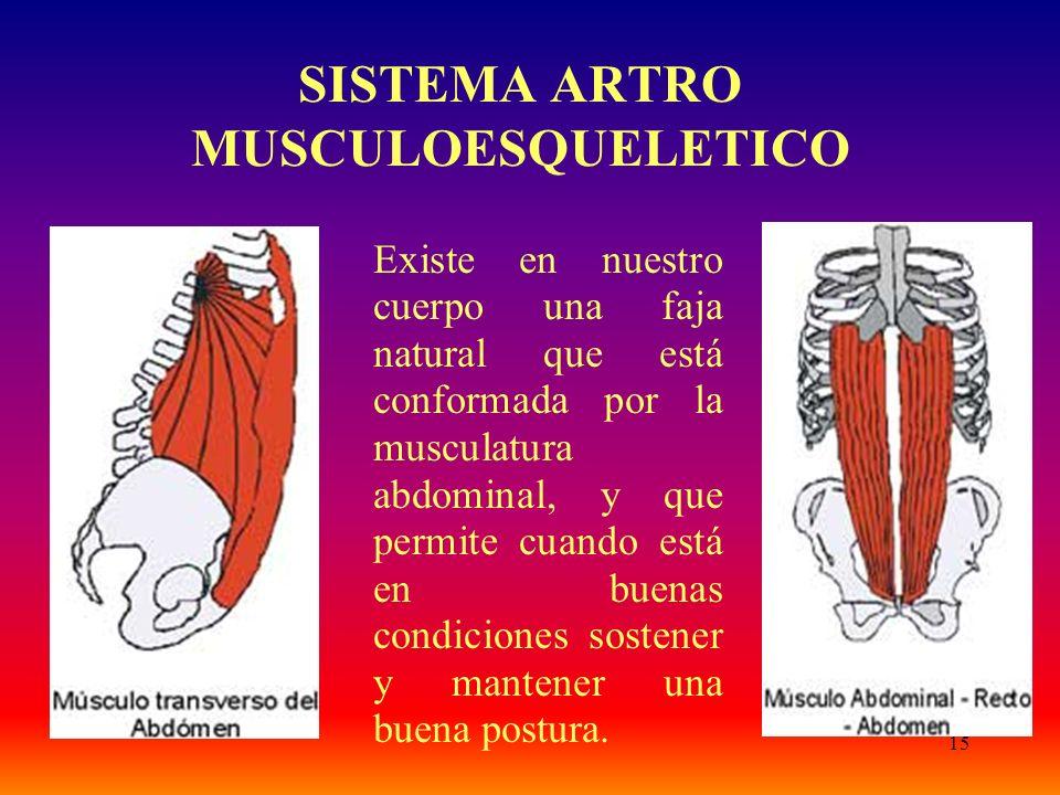 15 SISTEMA ARTRO MUSCULOESQUELETICO Existe en nuestro cuerpo una faja natural que está conformada por la musculatura abdominal, y que permite cuando está en buenas condiciones sostener y mantener una buena postura.