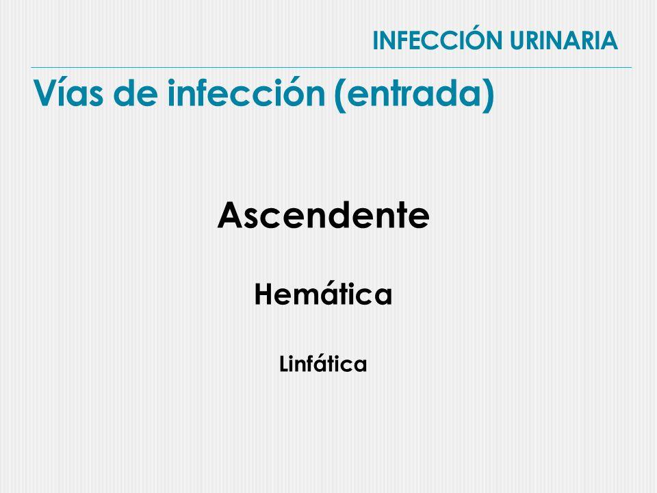 INFECCIÓN URINARIA Vías de infección (entrada)