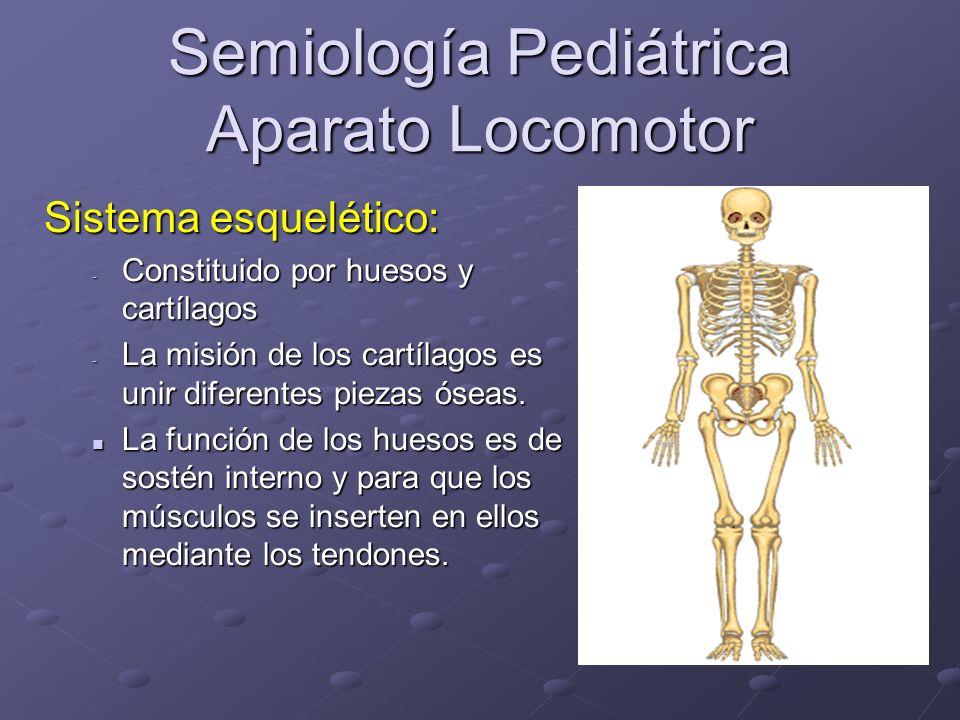 Semiología Pediátrica Aparato Locomotor Articulaciones: Articulaciones: Las sinartrosis: Las sinartrosis: son las articulaciones inmóviles, son las articulaciones inmóviles, no permiten el movimiento no permiten el movimiento Ej: los huesos planos del cráneo.