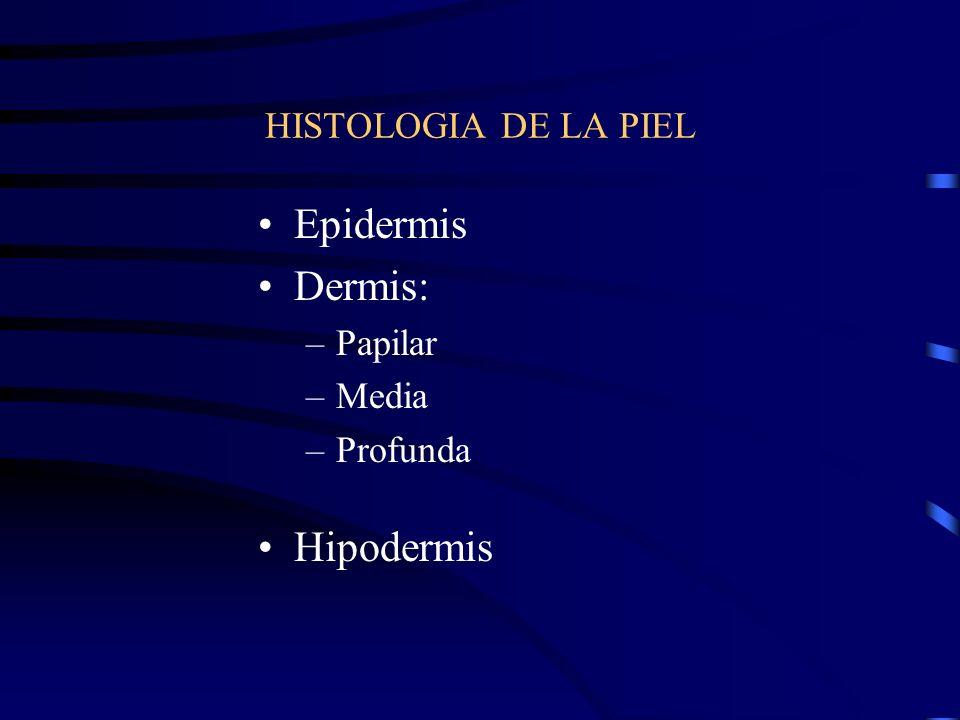 EMBRIOLOGIA DE LA PIEL Ectodermo: Epidermis y anexos de la piel Mesodermo: Dermis e Hipodermis