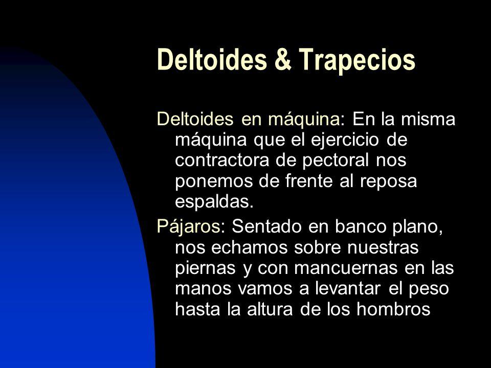 Deltoides & Trapecios Deltoides en máquina: En la misma máquina que el ejercicio de contractora de pectoral nos ponemos de frente al reposa espaldas.