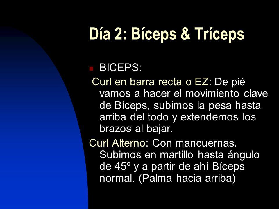 Día 2: Bíceps & Tríceps BICEPS: Curl en barra recta o EZ: De pié vamos a hacer el movimiento clave de Bíceps, subimos la pesa hasta arriba del todo y extendemos los brazos al bajar.
