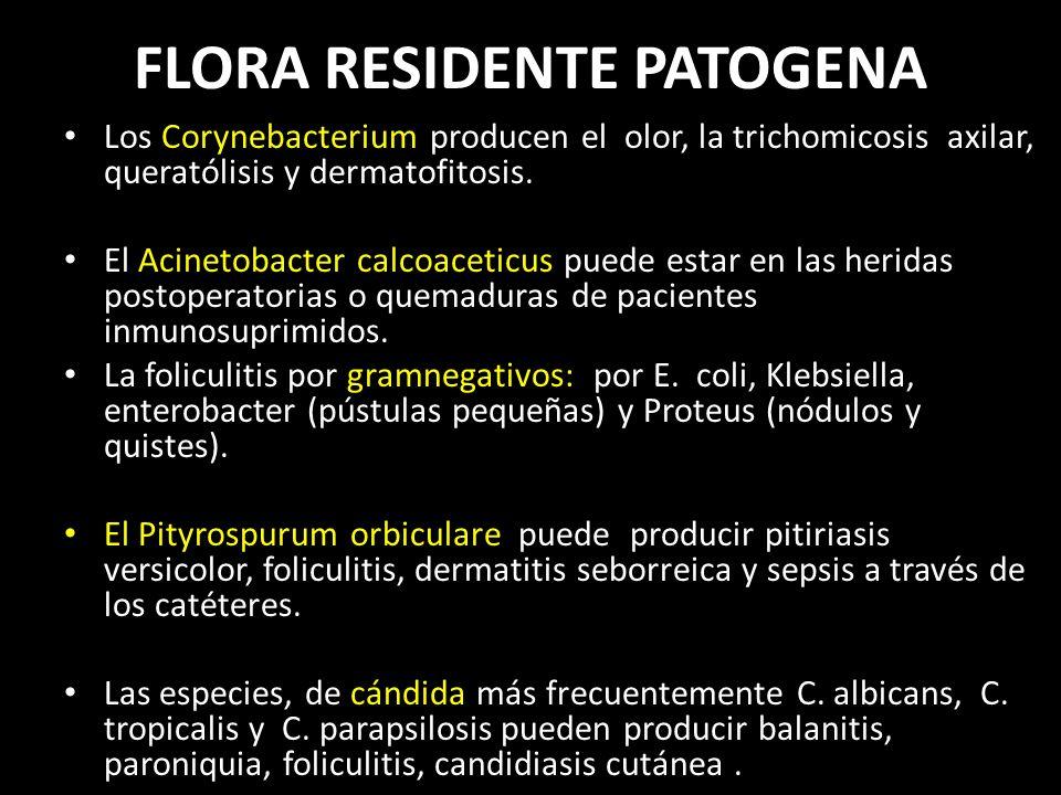 FLORA RESIDENTE PATOGENA Los Corynebacterium producen el olor, la trichomicosis axilar, queratólisis y dermatofitosis.