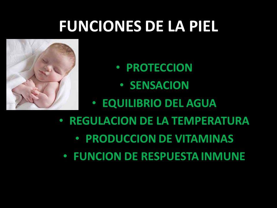 FUNCIONES DE LA PIEL PROTECCION SENSACION EQUILIBRIO DEL AGUA REGULACION DE LA TEMPERATURA PRODUCCION DE VITAMINAS FUNCION DE RESPUESTA INMUNE