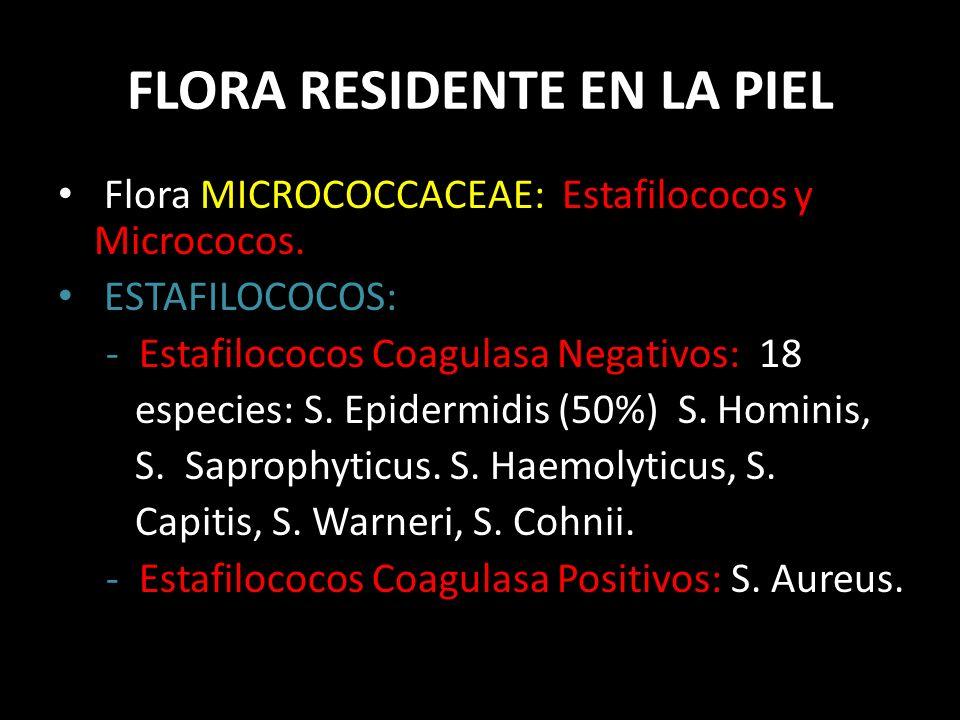 FLORA RESIDENTE EN LA PIEL Flora MICROCOCCACEAE: Estafilococos y Micrococos.