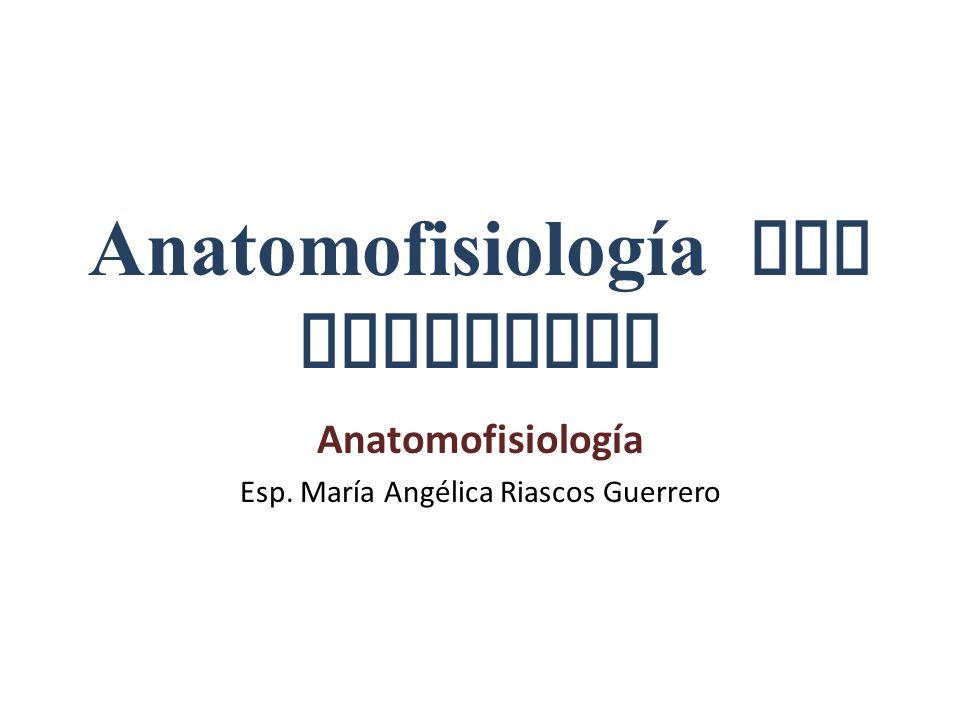 Anatomofisiología del Esqueleto Anatomofisiología Esp. María Angélica Riascos Guerrero