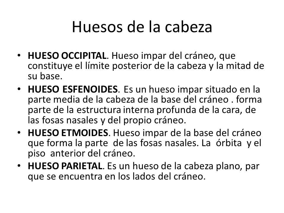 Huesos de la cabeza HUESO OCCIPITAL.