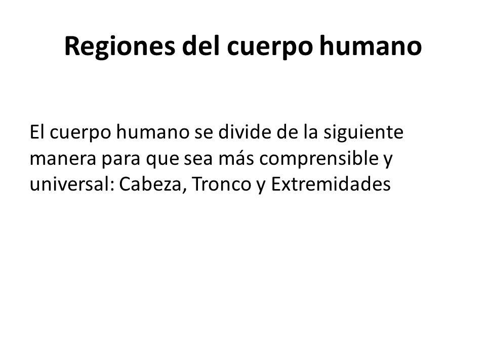 Regiones del cuerpo humano El cuerpo humano se divide de la siguiente manera para que sea más comprensible y universal: Cabeza, Tronco y Extremidades