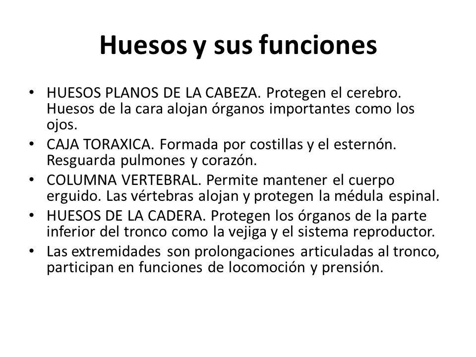 Huesos y sus funciones HUESOS PLANOS DE LA CABEZA.