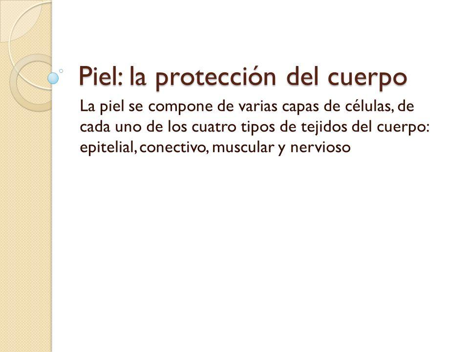 Piel: la protección del cuerpo La piel se compone de varias capas de células, de cada uno de los cuatro tipos de tejidos del cuerpo: epitelial, conectivo, muscular y nervioso