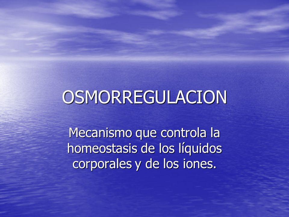 OSMORREGULACION Mecanismo que controla la homeostasis de los líquidos corporales y de los iones.
