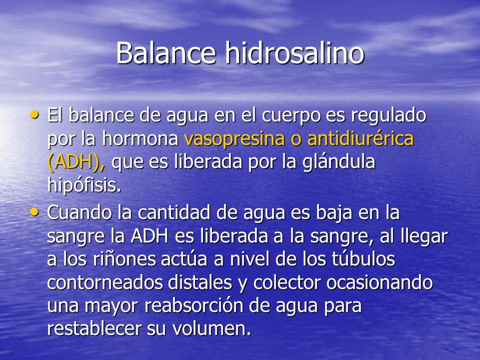 Balance hidrosalino El balance de agua en el cuerpo es regulado por la hormona vasopresina o antidiurérica (ADH), que es liberada por la glándula hipófisis.