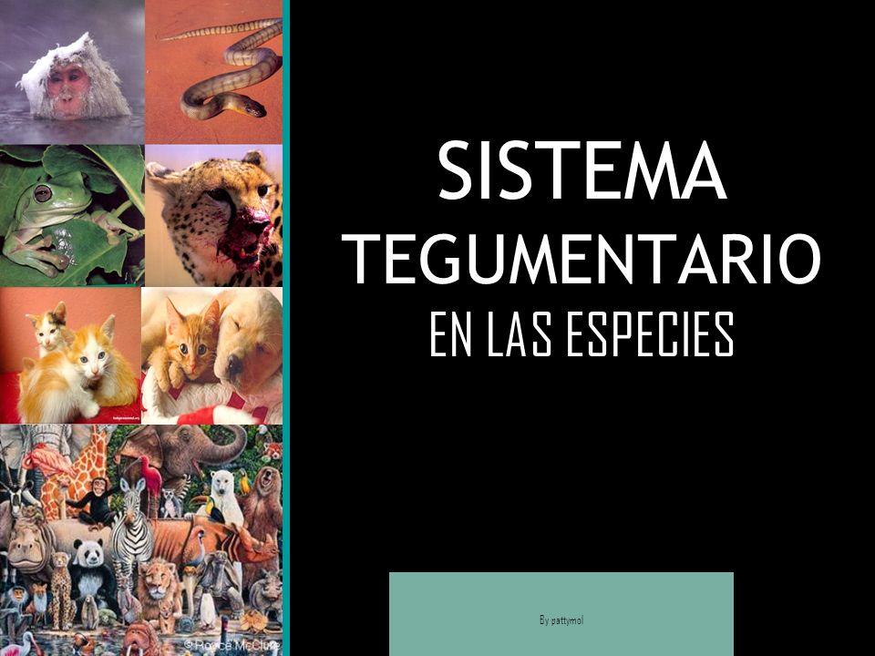 SISTEMA TEGUMENTARIO EN LAS ESPECIES By pattymol