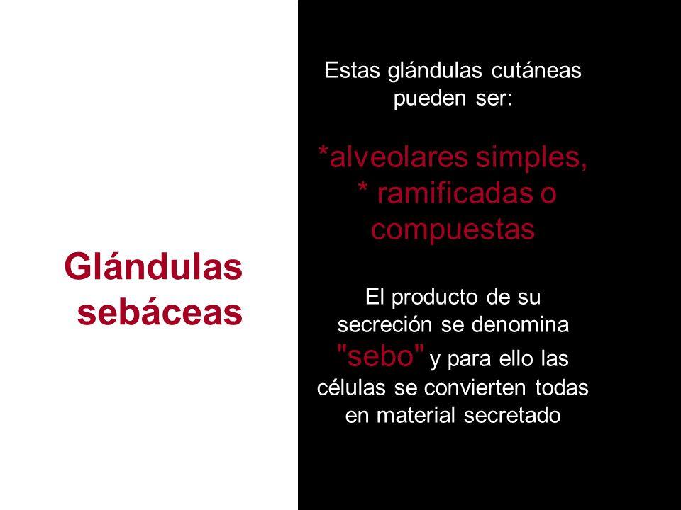 Estas glándulas cutáneas pueden ser: *alveolares simples, * ramificadas o compuestas El producto de su secreción se denomina sebo y para ello las células se convierten todas en material secretado Glándulas sebáceas