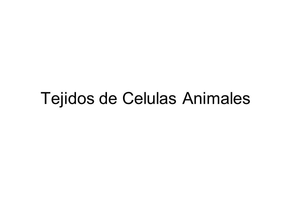 La Célula Estructura Básica de la Vida Profesor: Miguel Contreras V ...
