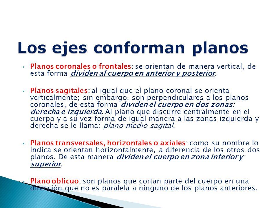 Planos coronales o frontales: se orientan de manera vertical, de esta forma dividen al cuerpo en anterior y posterior.
