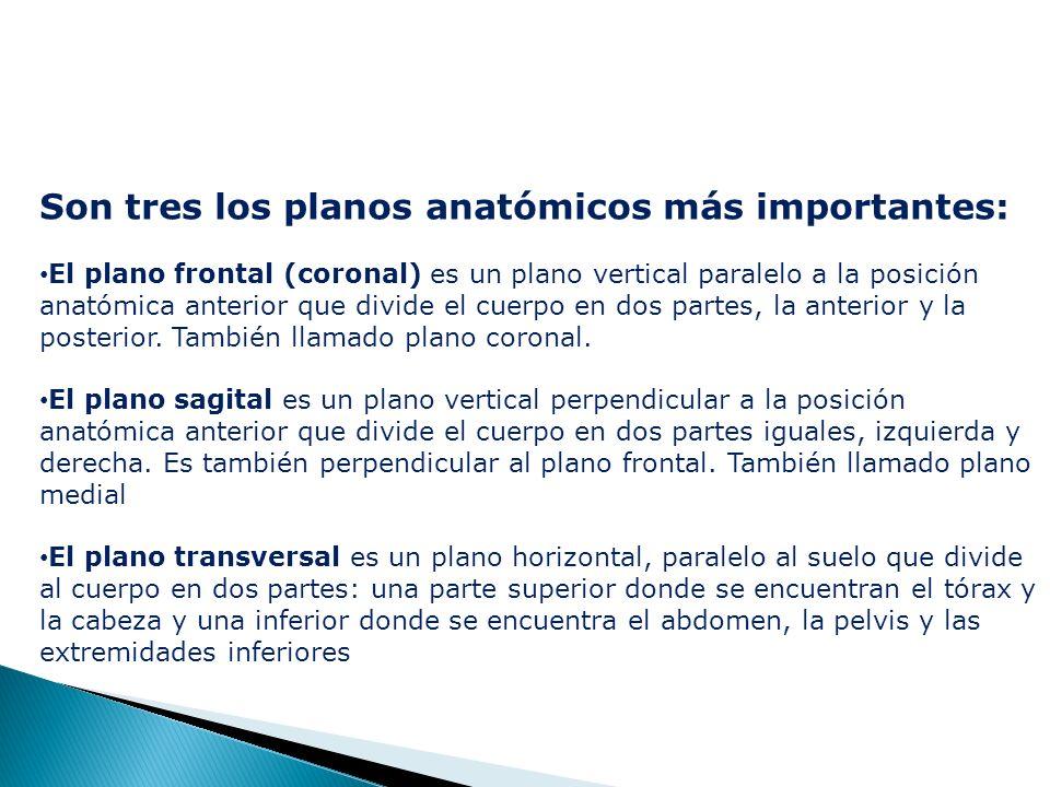 Son tres los planos anatómicos más importantes: El plano frontal (coronal) es un plano vertical paralelo a la posición anatómica anterior que divide el cuerpo en dos partes, la anterior y la posterior.