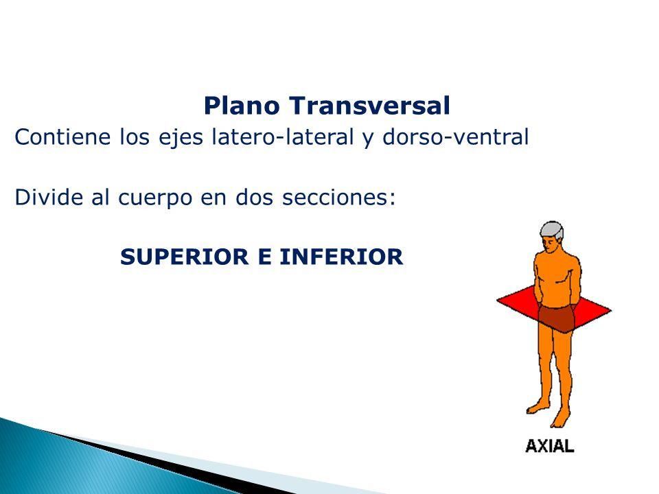 Plano Transversal Contiene los ejes latero-lateral y dorso-ventral Divide al cuerpo en dos secciones: SUPERIOR E INFERIOR
