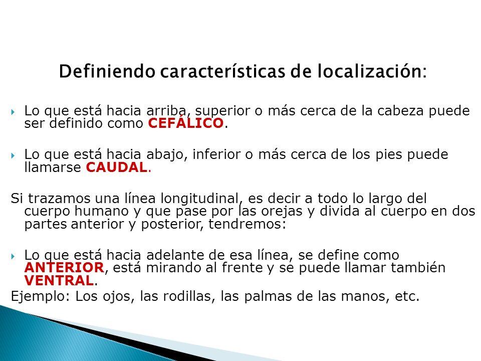 Definiendo características de localización:  Lo que está hacia arriba, superior o más cerca de la cabeza puede ser definido como CEFÁLICO.