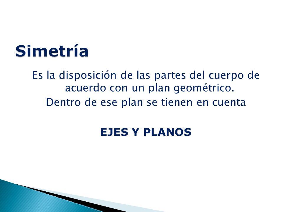 Es la disposición de las partes del cuerpo de acuerdo con un plan geométrico.