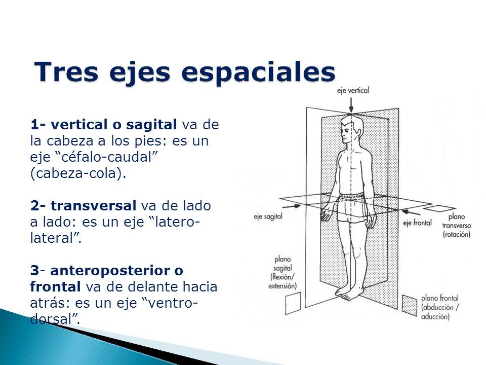 1- vertical o sagital va de la cabeza a los pies: es un eje céfalo-caudal (cabeza-cola).