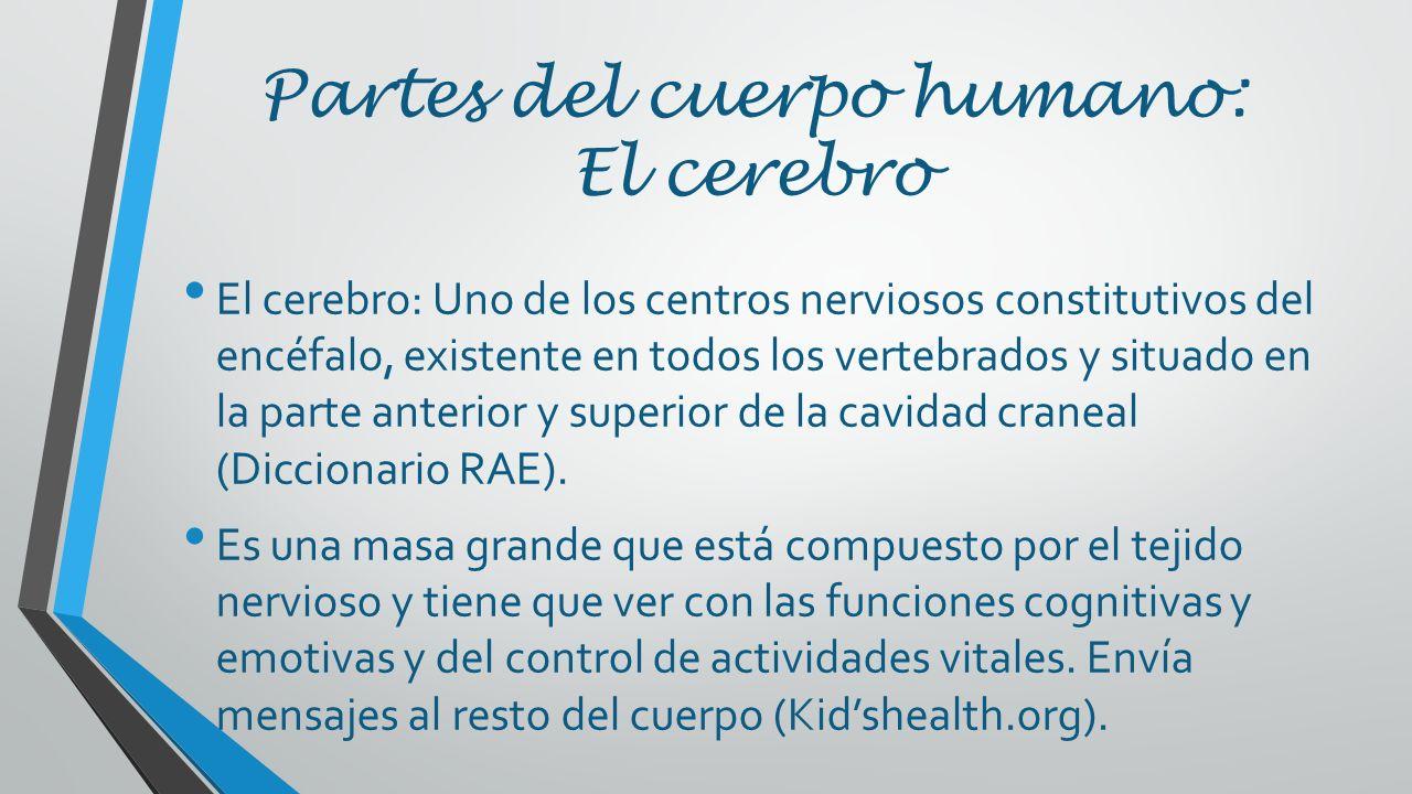 Partes del cuerpo que afectan el comportamiento humano Heriberto ...