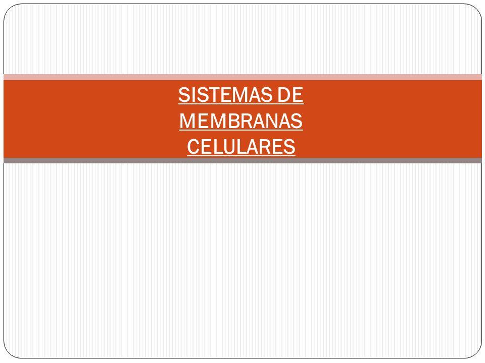 SISTEMAS DE MEMBRANAS CELULARES