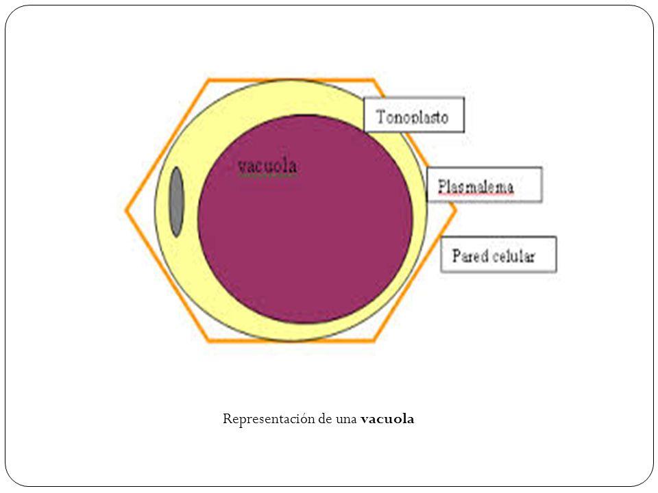 Representación de una vacuola