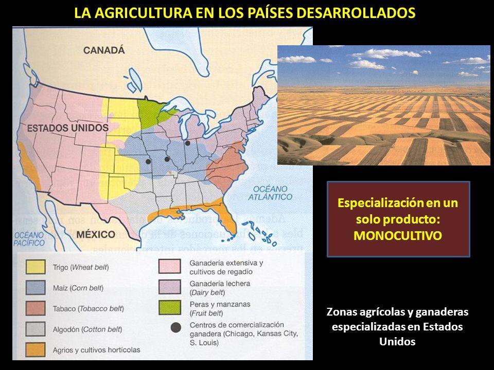 Zonas agrícolas y ganaderas especializadas en Estados Unidos LA AGRICULTURA EN LOS PAÍSES DESARROLLADOS Especialización en un solo producto: MONOCULTIVO