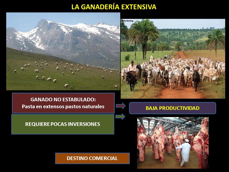 LA GANADERÍA EXTENSIVA GANADO NO ESTABULADO: Pasta en extensos pastos naturales REQUIERE POCAS INVERSIONES DESTINO COMERCIAL BAJA PRODUCTIVIDAD