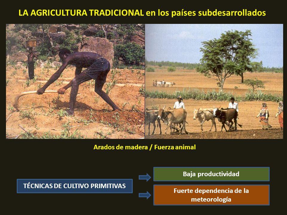 LA AGRICULTURA TRADICIONAL en los países subdesarrollados Arados de madera / Fuerza animal TÉCNICAS DE CULTIVO PRIMITIVAS Fuerte dependencia de la meteorología Baja productividad