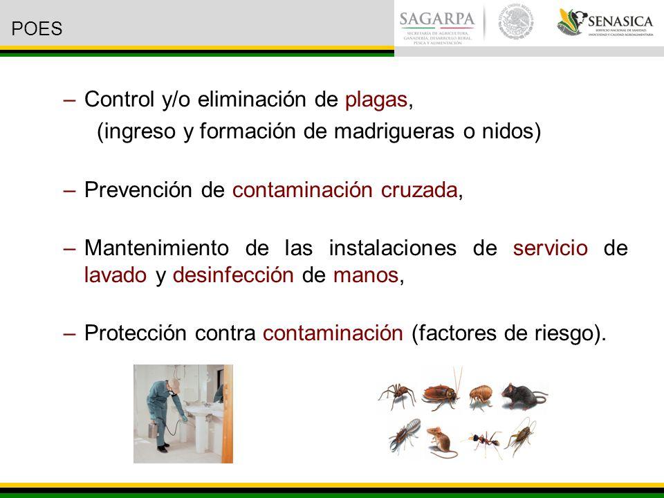 –Control y/o eliminación de plagas, (ingreso y formación de madrigueras o nidos) –Prevención de contaminación cruzada, –Mantenimiento de las instalaciones de servicio de lavado y desinfección de manos, –Protección contra contaminación (factores de riesgo).