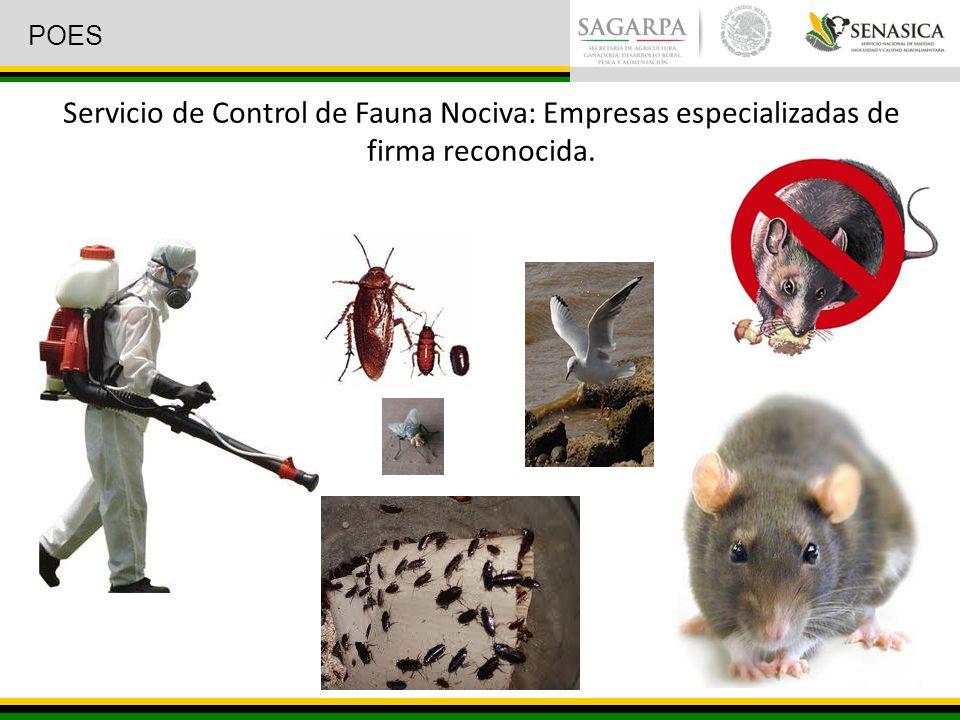 Servicio de Control de Fauna Nociva: Empresas especializadas de firma reconocida. POES