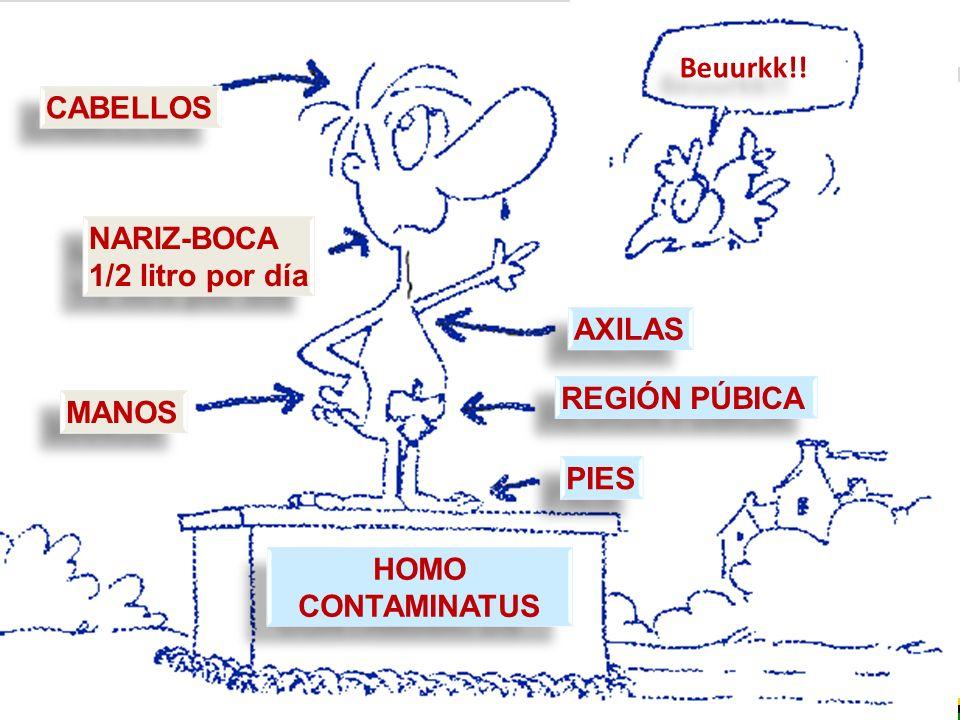 HOMO CONTAMINATUS CABELLOS NARIZ-BOCA 1/2 litro por día NARIZ-BOCA 1/2 litro por día PIES REGIÓN PÚBICA AXILAS MANOS Beuurkk!!