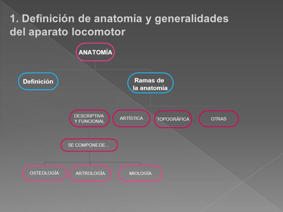 Increíble Definición De Rotación En La Anatomía Bosquejo - Imágenes ...