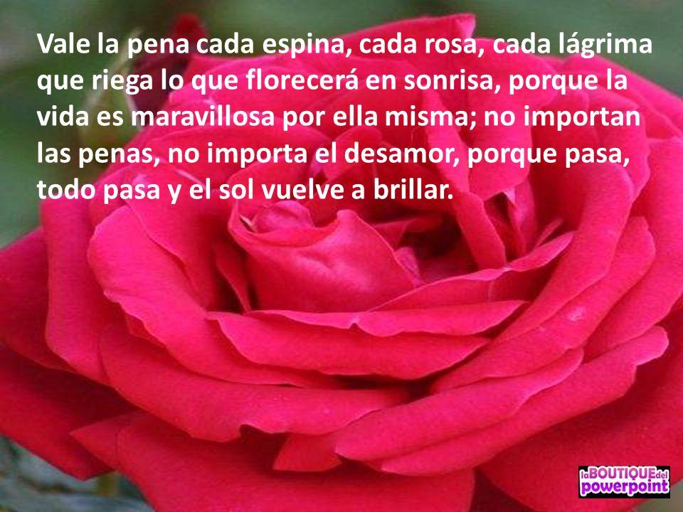 Vale la pena cada espina, cada rosa, cada lágrima que riega lo que florecerá en sonrisa, porque la vida es maravillosa por ella misma; no importan las penas, no importa el desamor, porque pasa, todo pasa y el sol vuelve a brillar.