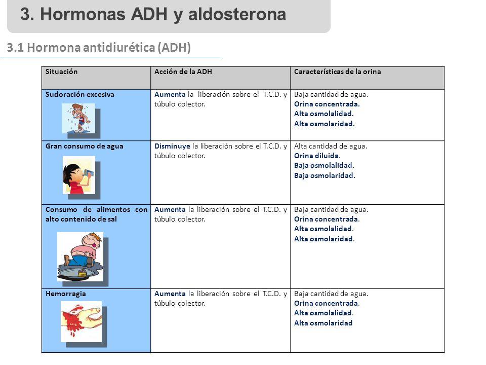 3. Hormonas ADH y aldosterona 3.1 Hormona antidiurética (ADH) SituaciónAcción de la ADHCaracterísticas de la orina Sudoración excesivaAumenta la liber
