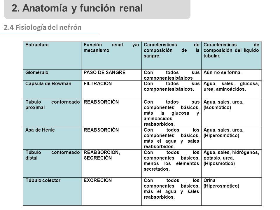 2. Anatomía y función renal 2.4 Fisiología del nefrón EstructuraFunción renal y/o mecanismo Características de composición de la sangre. Característic