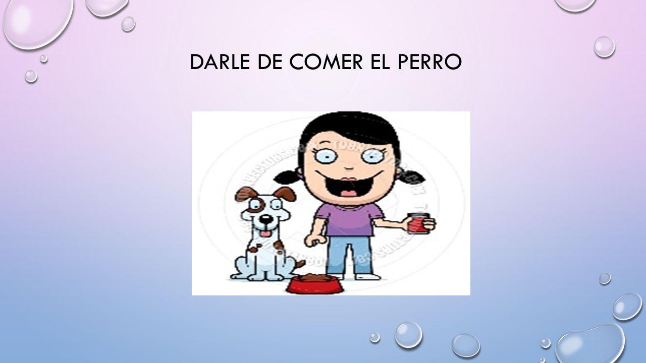 DARLE DE COMER EL PERRO
