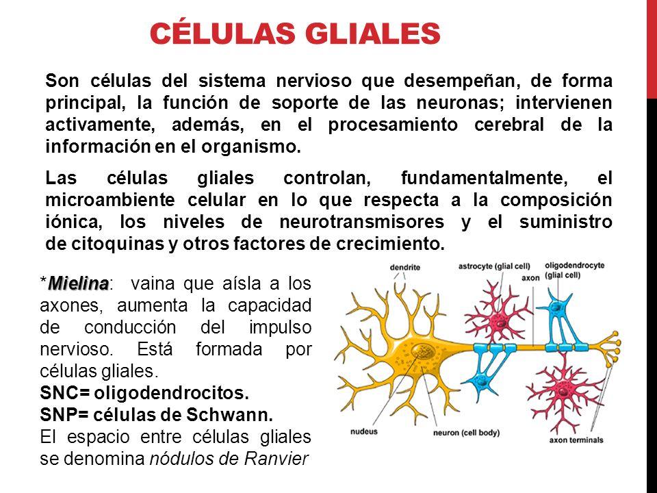 Resultado de imagen de un organismo es un completo sistema de procesos de información