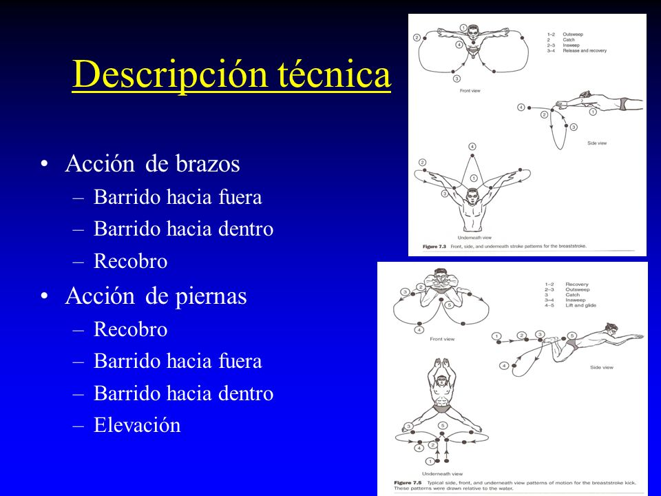 Descripción técnica Acción de brazos –Barrido hacia fuera –Barrido hacia dentro –Recobro Acción de piernas –Recobro –Barrido hacia fuera –Barrido hacia dentro –Elevación