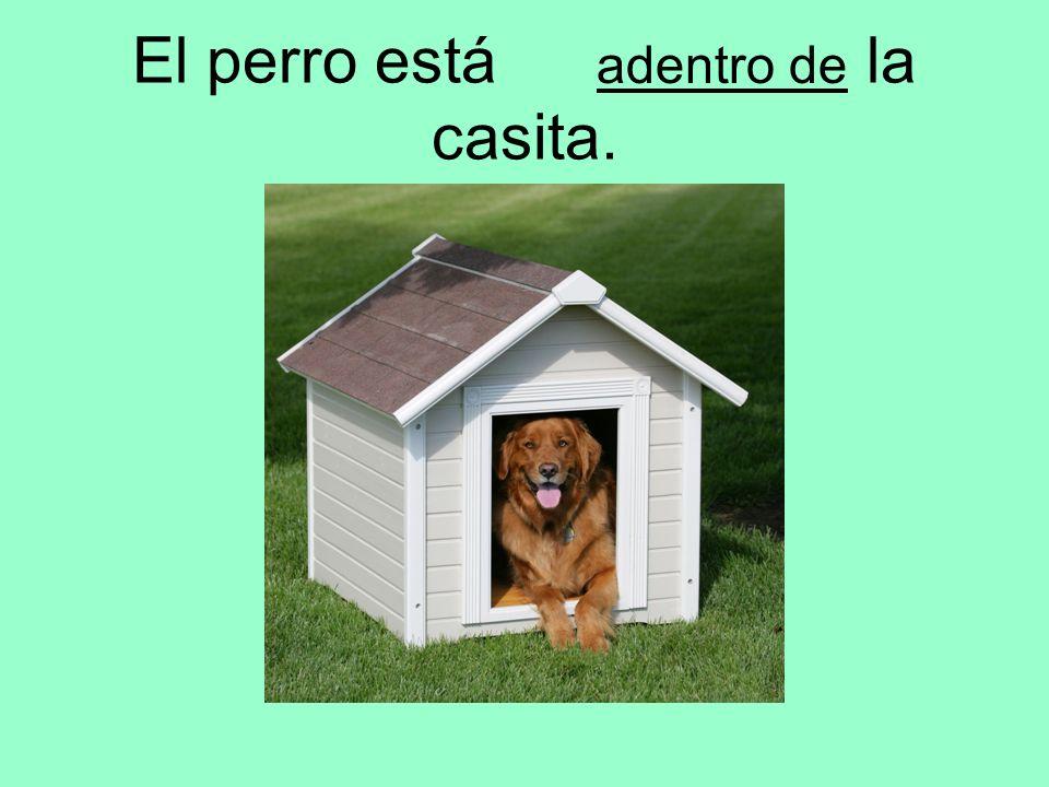 El perro está la casita. adentro de