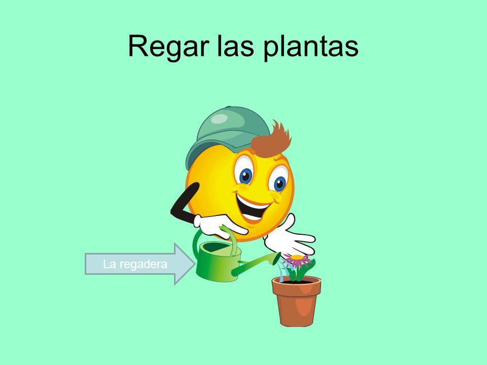 Regar las plantas La regadera