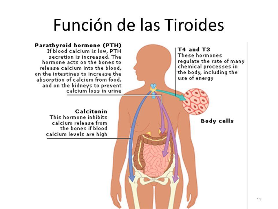 Hermosa Sistema Hepatobiliar Anatomía Y Fisiología Ilustración ...