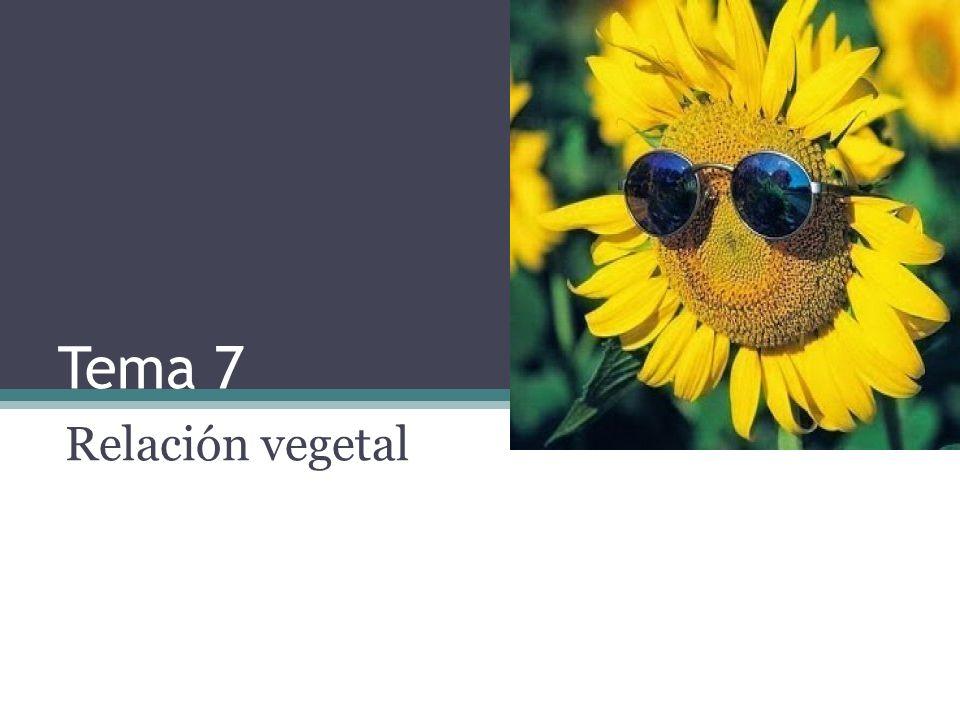 Tema 7 Relación vegetal