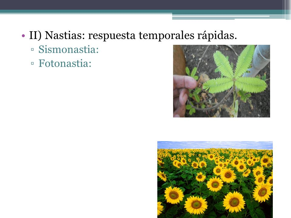 II) Nastias: respuesta temporales rápidas. ▫Sismonastia: ▫Fotonastia: