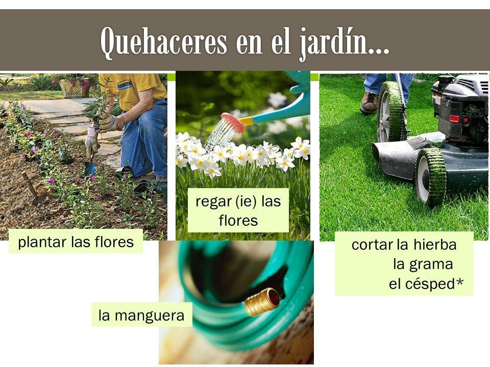plantar las flores regar (ie) las flores cortar la hierba la grama el césped* la manguera