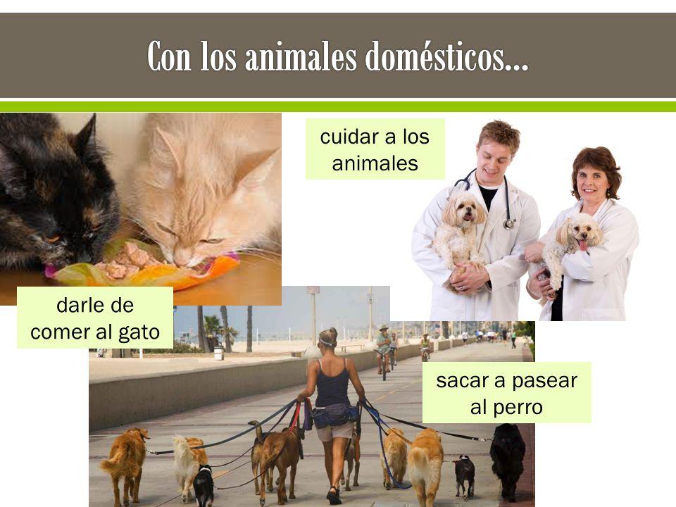 darle de comer al gato sacar a pasear al perro cuidar a los animales