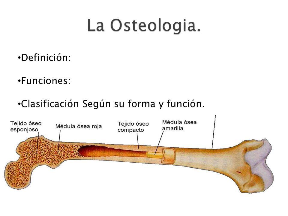 Definición: Funciones: Clasificación Según su forma y función.
